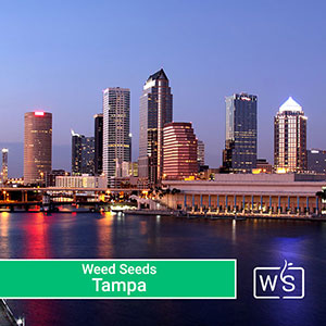 buy-weed-seeds-in-tampa