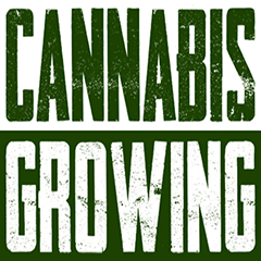 common-problems-with-growing-weed