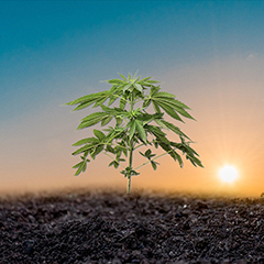 best-compost-for-growing-cannabis-ourdoors