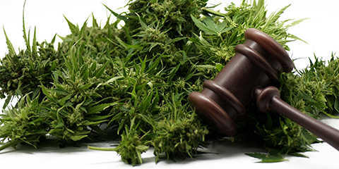 buy-legal-weed-seeds-In-the-usa
