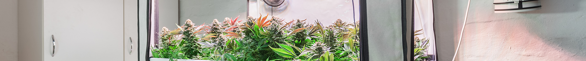 carbon-dioxide-generators-for-cannabis-growers