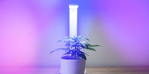 growing-weed-under-artificial-light
