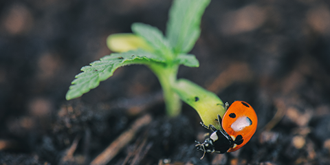 healthy-soil-attracts-the-right-beneficial-bugs