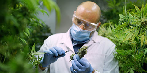 inspect-your-buds-for-quality-assurance