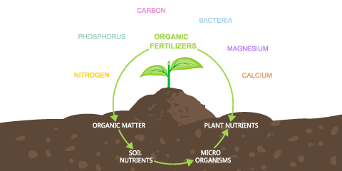 using-organic-fertilizers-and-natural-compost