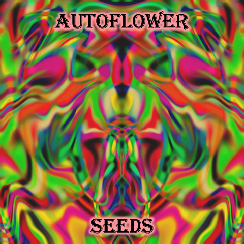 autoflower-female-seeds