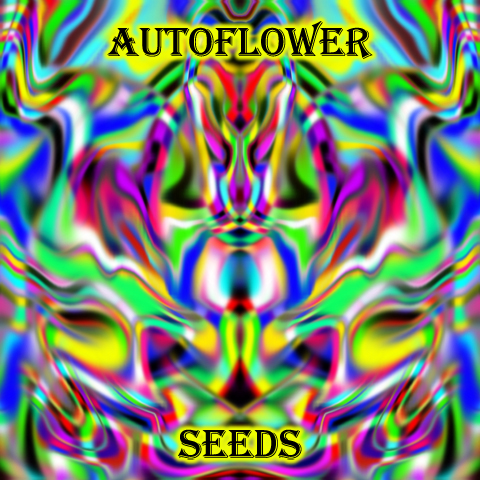 autoflower-feminized-seeds