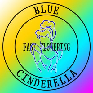 blue-cinderella-fast-photo-fem