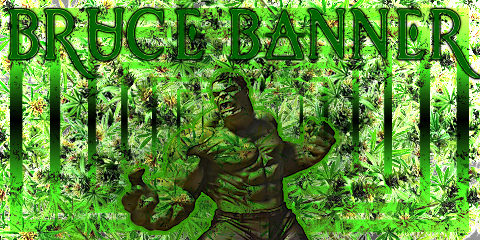 bruce-banner-weed-seeds
