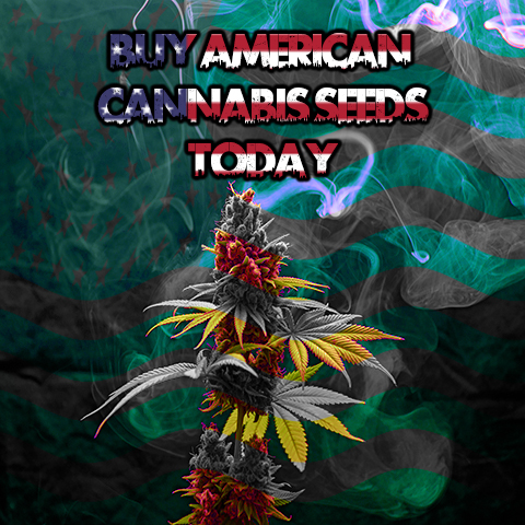 buy-american-seeds-online-in-the-usa
