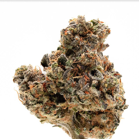 buy-girl-scout-cookies-strain-seeds-online-in-the-usa