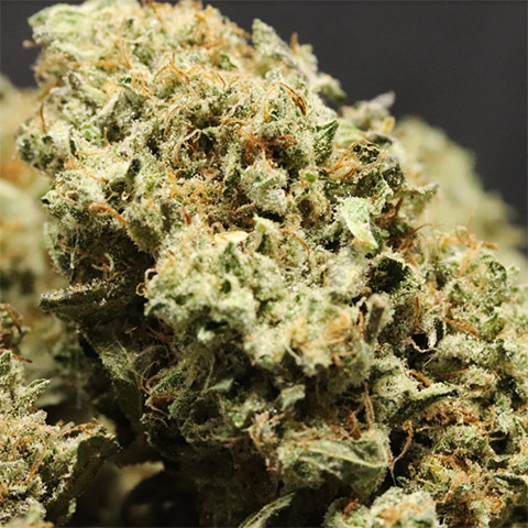 buy-strawberry-kush-strain-seeds-online-in-the-usa
