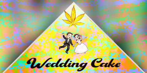 Weddingcake Seeds