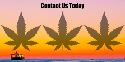contact-weed-seeds-usa-today-for-american-cannabis-seeds