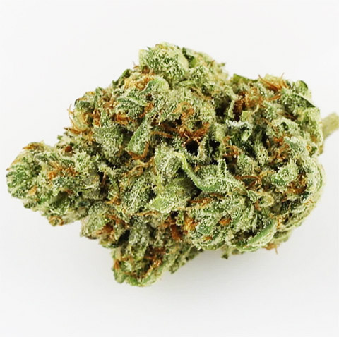 does-weed-seeds-sell-24k-gold-feminized-seeds