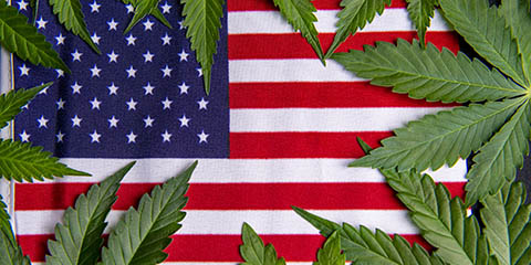 grow-weed-in-usa
