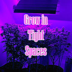 grow-in-tight-spaces