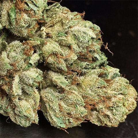 growing-bruce-banner-fast-photoperiod-female-cannabis