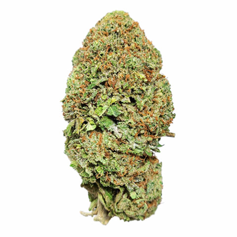 growing-trainwreck-photoperiod-female-from-seed