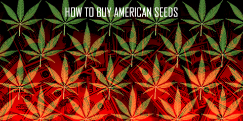 how-to-buy-american-seeds