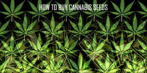 how-to-buy-cannabis-seeds