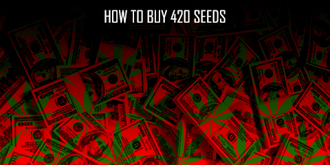 how-to-buy-420-seeds