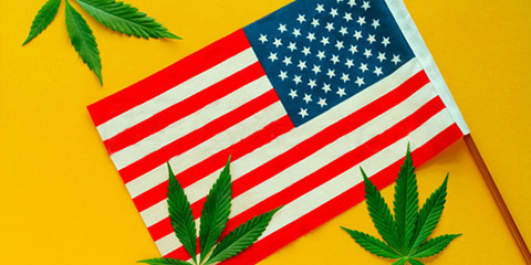 making-concentrates-in-the-usa