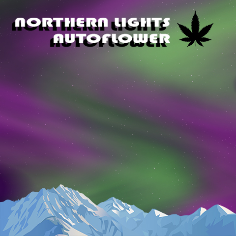 northern-lights-auto-fem