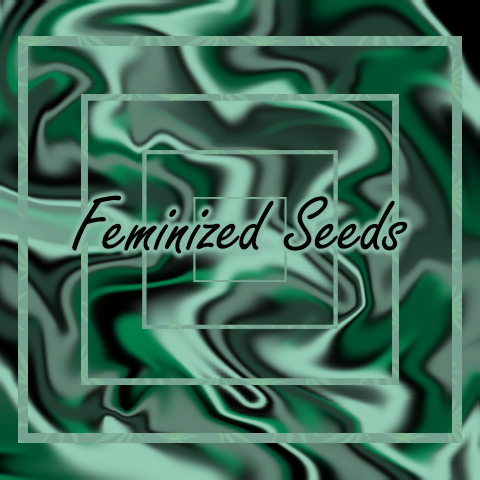 photoperiod-feminized-seeds