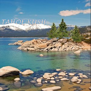 tahoe-kush-photo-fem