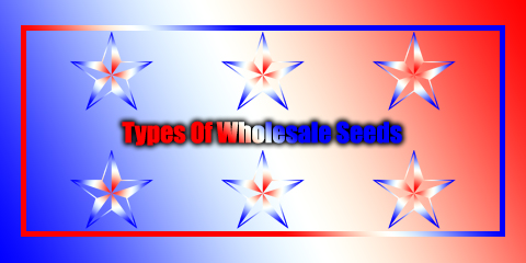 types-of-wholesale-seeds