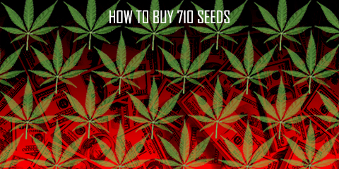 how-to-buy-710-seeds