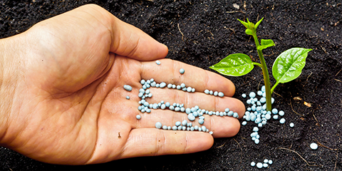 supplementing-outdoor-soil-with-added-nutrients