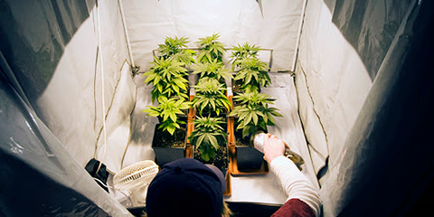 train-your-plants-to-grow-close-together