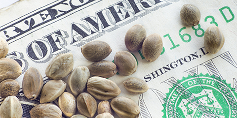 how-to-buy-indica-seeds-online