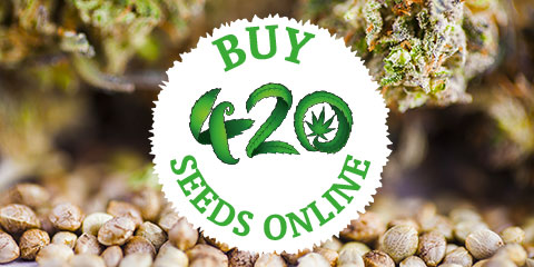 buy-420-seeds-online-from-weed-seeds-usa
