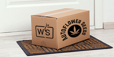 how-can-i-get-autoflower-seeds-delivered-to-my-home