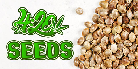 how-are-420-seeds-made