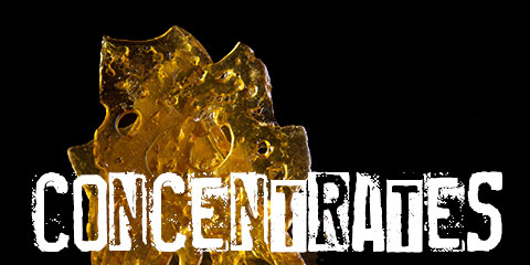 making-concentrates-with-your-sativa-seed-strains
