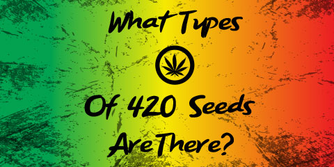what-types-of-420-seeds-are-there