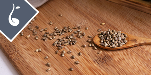 what-types-of-autoflower-seeds-are-there